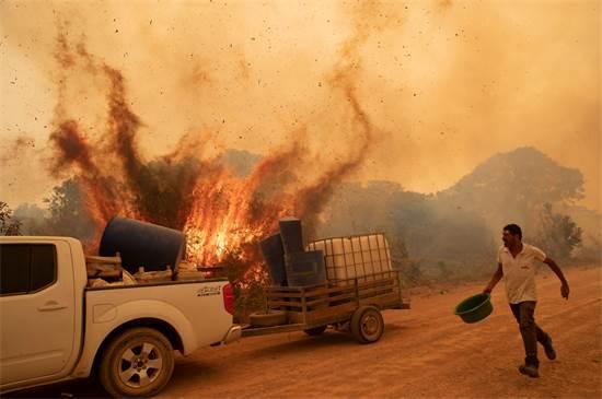מתנדב מנסה לכבות שרפה בשטחי הפנטנאל  / צילום: Andre Penner, AP