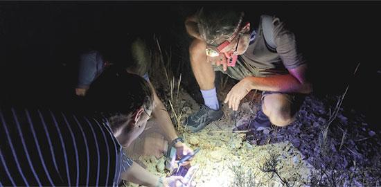 סיור עקרבים לילי באזור ירוחם  / צילום: המעבדה לחקר עקרבי ישראל