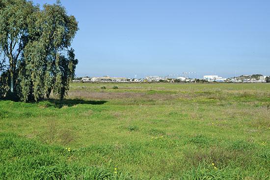 קרקע בפי גלילות, בשטח המוניציפלי של רמת השרון / צילום: איל יצהר, גלובס