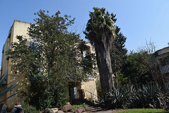 בניין בקצרין / צילום: בר אל