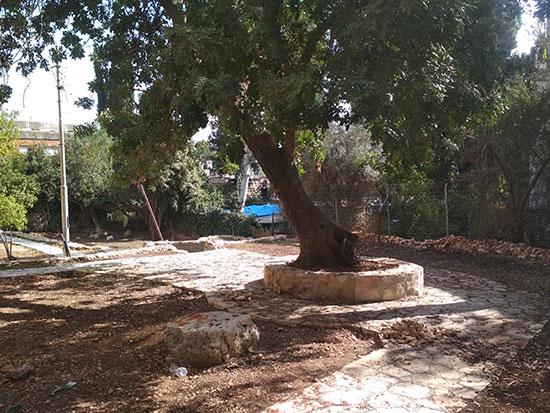 חצר הבנין / צילום: תמונה פרטית