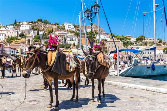 חמורים באי היווני הידרה / צילום: שאטרסטוק