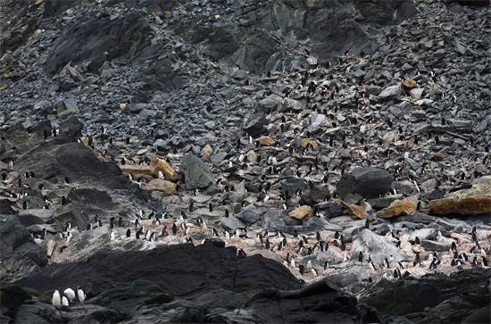 אי הפיל באנטארקטיקה / צילום: Abbie Trayler-Smit, גרינפיס