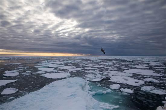 זריחה באוקיינוס הארקטי ליד גרינלנד / צילום: Daniella Zalcman, גרינפיס