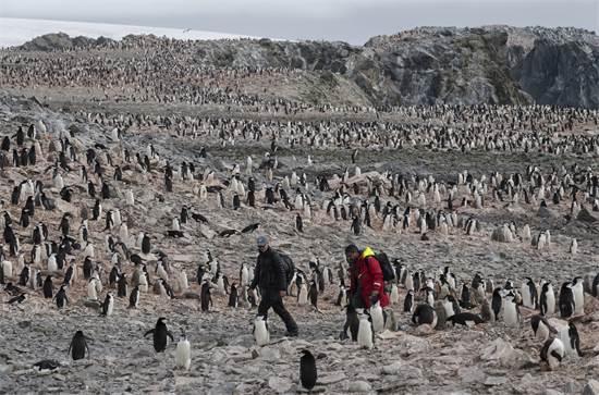 מדענים במושבת פינגווני רצועת-הסנטר באנטארקטיקה / צילום: Christian ?slund, גרינפיס