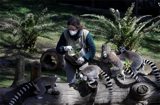 עובדת בגן חיות ברומא מאכילה למורים / צילום: Alessandra Tarantino, AP