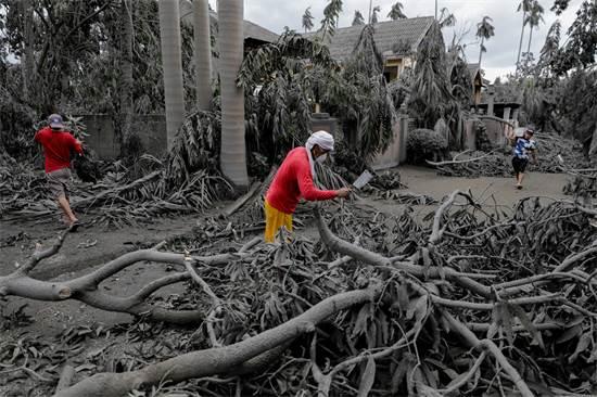 פועל קוצץ ענפים שקרסו באתר נופש שכוסה באבק וולקני / צילום: Eloisa Lopez, רויטרס