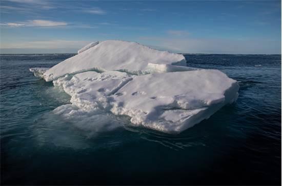 טביעות רגל של דובי קוטב על קרחונים באוקיינוס הארקטי. צמצום שטח הקרח מציב את דובי הקוטב בסכנה קיומית / צילום: Daniella Zalcman, גרינפיס