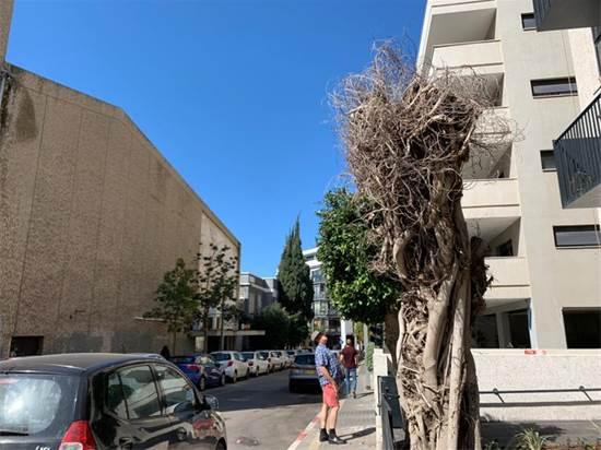 עץ כרות במרחב העירוני / צילום: רבקה ויסברג