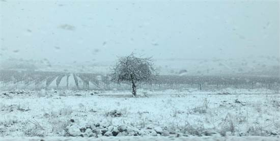"""שלג בכרמים של יקב רמת הגולן / צילום: לילך שיפמן, יח""""צ"""