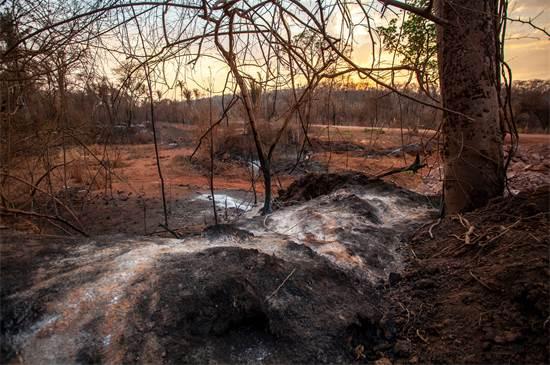 נזקי השריפות בשטחי הפנטנאל / צילום: Leandro Cagiano, גרינפיס