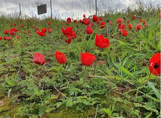 פרחים במתחם דרום גלילות / צילום: החברה להגנת הטבע