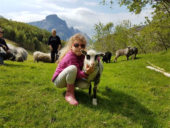 אלה (9) מטפלת בכבשים של המשפחה / צילום: תמונה פרטית