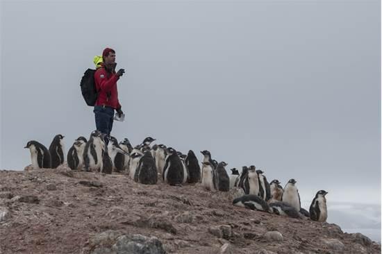 המדען אלכס בורוביץ' סופר פינגווינים מזן ג'נטו באנטארקטיקה / צילום: Christian ?slund, גרינפיס
