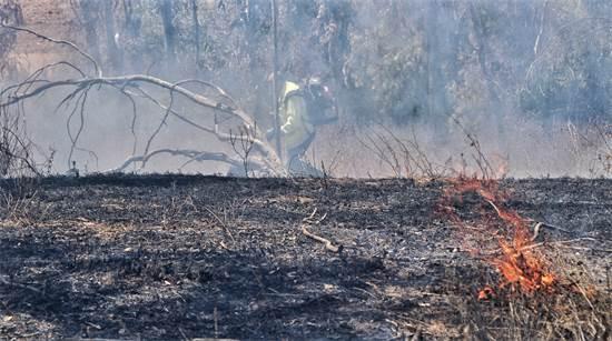 """הנזקים בעוטף עזה בשל בלוני תבערה / צילום: יניב כהן, רשות הטבע והגנים, יח""""צ"""
