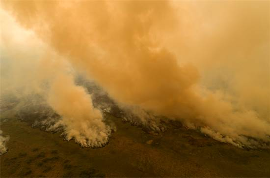 שריפות בשטחי הפנטנאל. לפי גרינפיס, 26% משמורת הפנטנאל נאחזה השנה באש / צילום: Andre Penner, AP