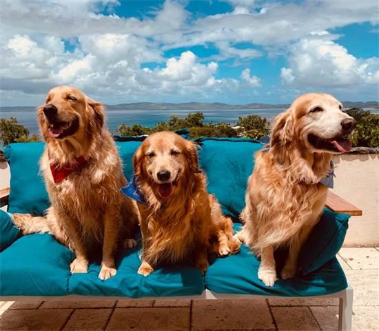 הכלבים של המשפחה מבלים במסעדה / צילום: תמונה פרטית