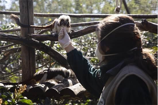 עובדת בגן חיות ברומא מאכילה טמרינים / צילום: Alessandra Tarantino, AP