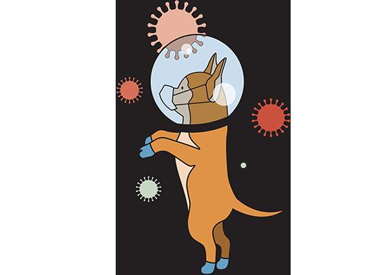 הכלב ממוגן מהקורונה / איור: איל אונגר, גלובס