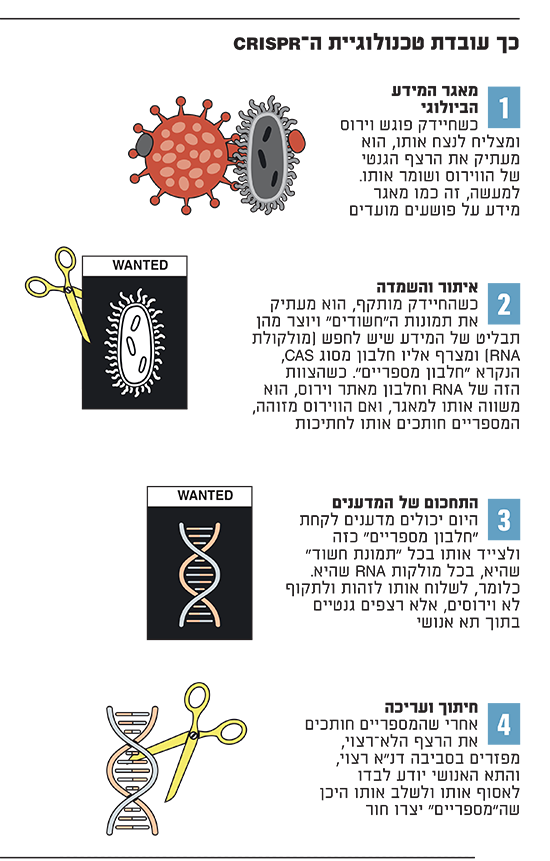 כך עובדת טכנולוגיית ה-CRISPR
