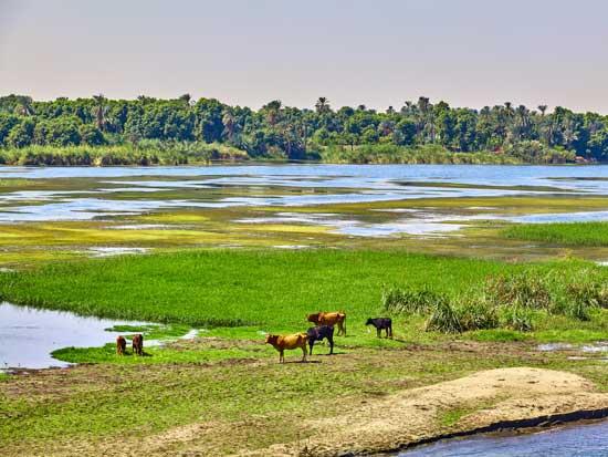 הרצועה הכפרית הירוקה שבאזורים הכפריים סביב הנילוס / צילום:  Shutterstock | א.ס.א.פ קריאייטיב