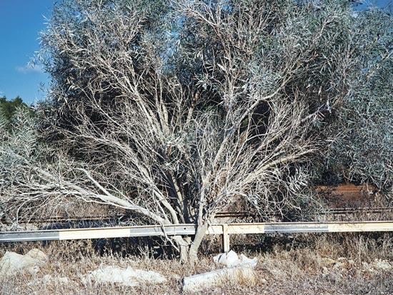 עץ מיובש, גלעד אופיר / צלם יחצ