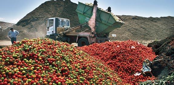 ירקות מלפפונים עגבניות / צלם רויטרס