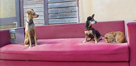 בית אבות לכלבים / צילום: שלומי יוסף