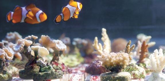 אלמוגים / צילום: כפיר זיו
