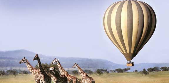 ספארי לטנזניה / צילום: יחצ