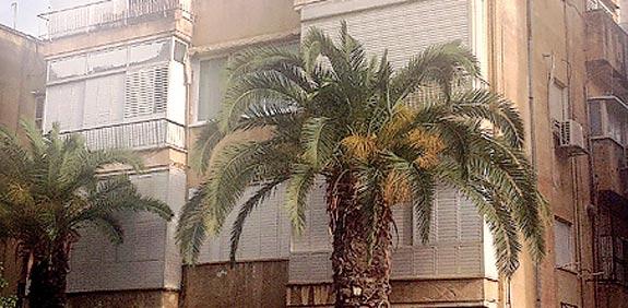 דירה בתל אביב ברחוב לסקוב / צילום: עומרי גל