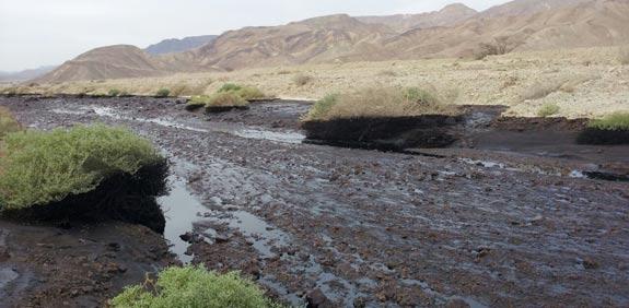 דליפת הנפט בערבה  / צילום: רחלי זבולוני