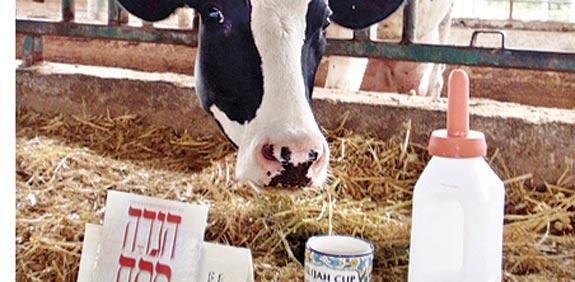 רפת שביל פרות החלב / צילום: יחצ