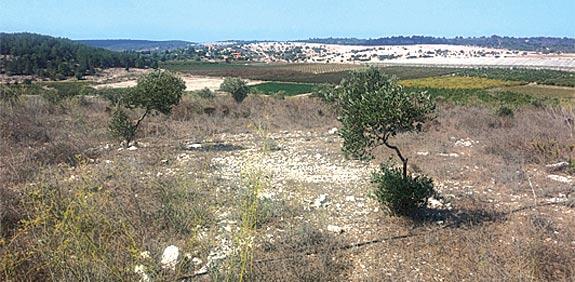הגבעה המתייבשת  ממזרח לבית  / צילום: דרור מרמור