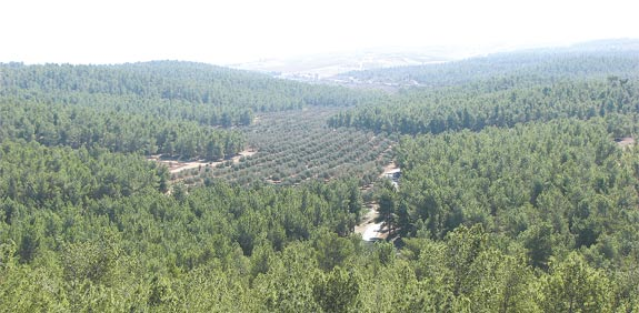 """יער של קק""""ל / צילום: קק""""ל"""