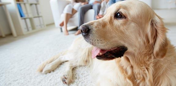 כלב / צילום: שאטרסטוק