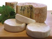 גבינה גבינות
