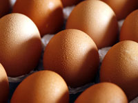ביצים, מזון אוכל / צלם רויטרס