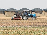 נחלה חקלאית מושב חקלאות קריירה עבודה תעסוקה טרקטור תעשייה / צלם:  איל יצהר