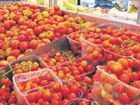עגבניה עגבניות / צלם: תמר מצפי