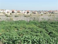 אדמה חקלאית  / צלם: תמר מצפי