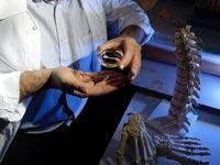 בונוס עצמות / צילום: יחצ