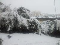 שלג בירושלים / צילום: עמירם ברקת