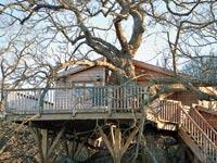 דופלקס על עץ הערמון / צלם:יחצ