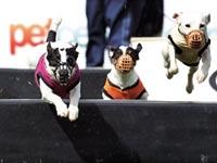 כלבים / צילום: רויטרס