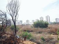 קרקעות לבנייה / צילום: תמר מצפי