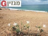 חוף  אשקלון / צילום: אורלי גנוסר