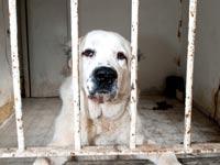 כלב כלוא בבית נטוש ביפו / צילום: רפי קוץ