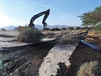 דליפת הנפט בערבה / צילום: רפי קוץ
