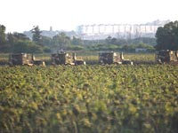 שדה חקלאי בעוטף עזה / צילום: רויטרס